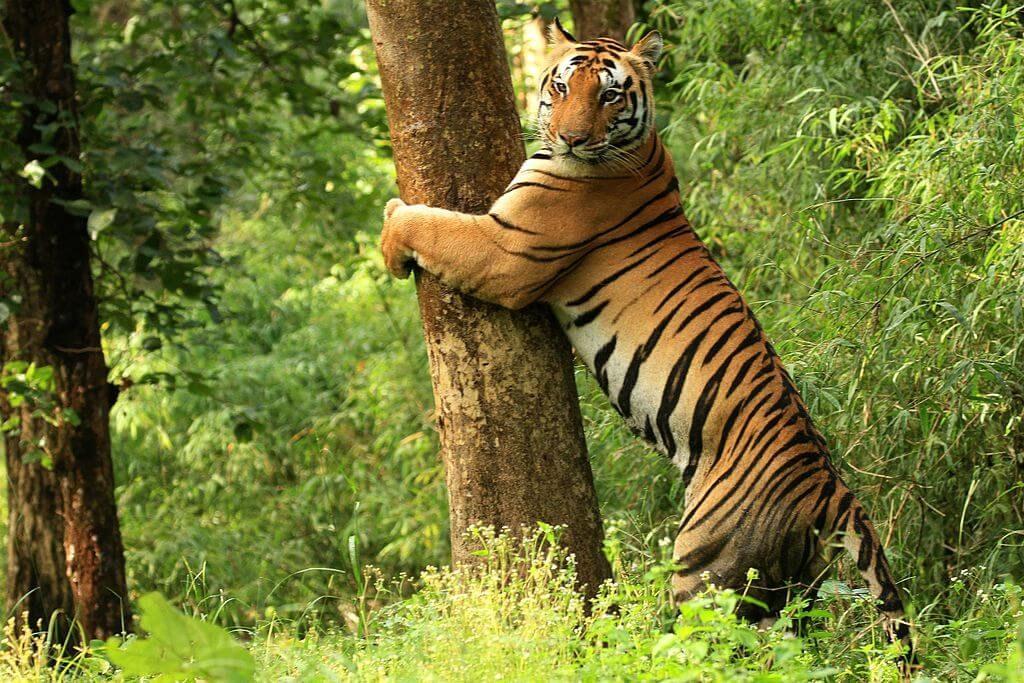 Quoi visiter au Chhattisgarh - réserve sauvage d'Achanakmar