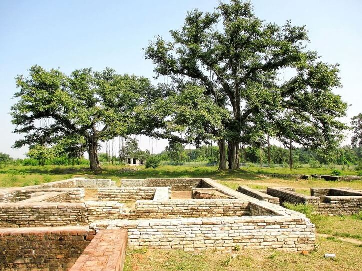 Two big trees of Buddha called Bodhi tree actually ficus religiosa, behind the old market structures in Sirpur CG