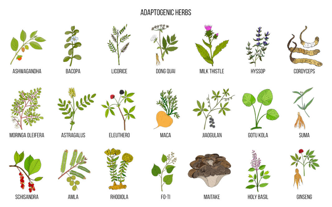 Amla and other adaptogen herbs table