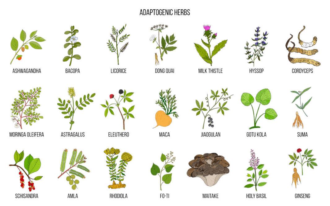 Tableau de l'amla et autres plantes adaptogènes