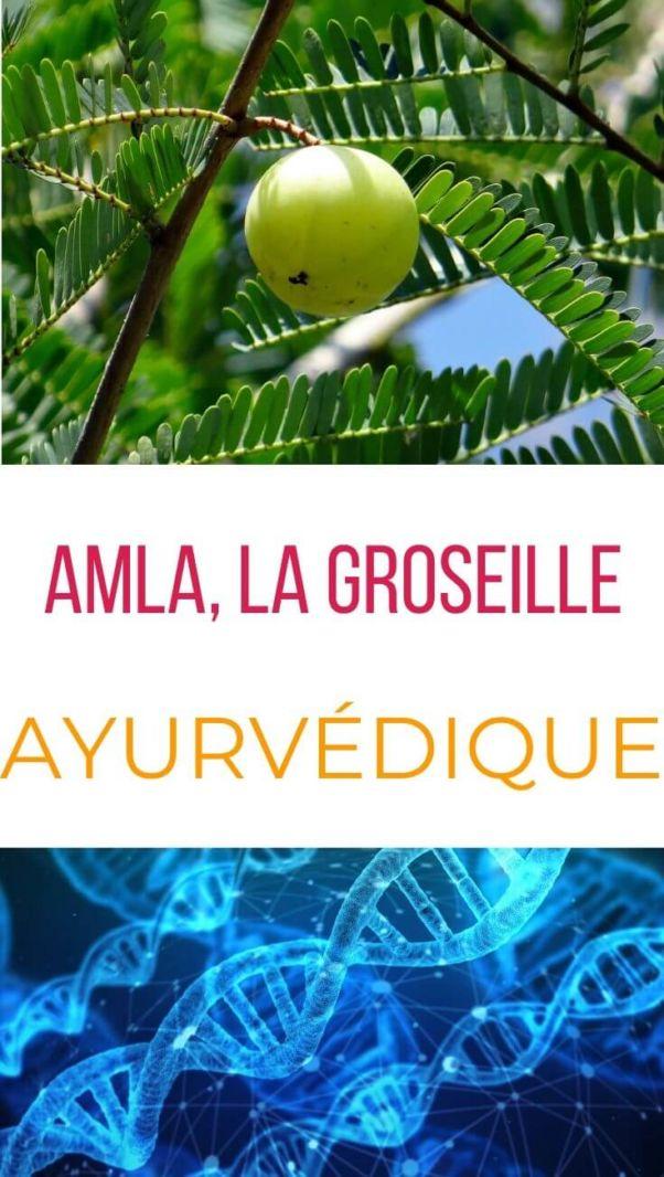 Pin amla groseille ayurvédique
