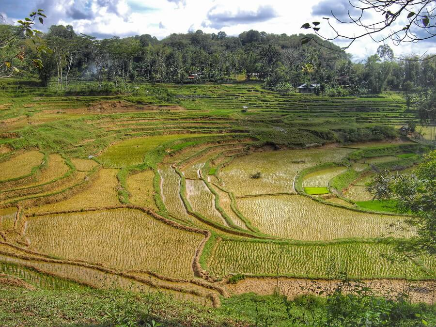 Beautiful view of the rice terraces full of water