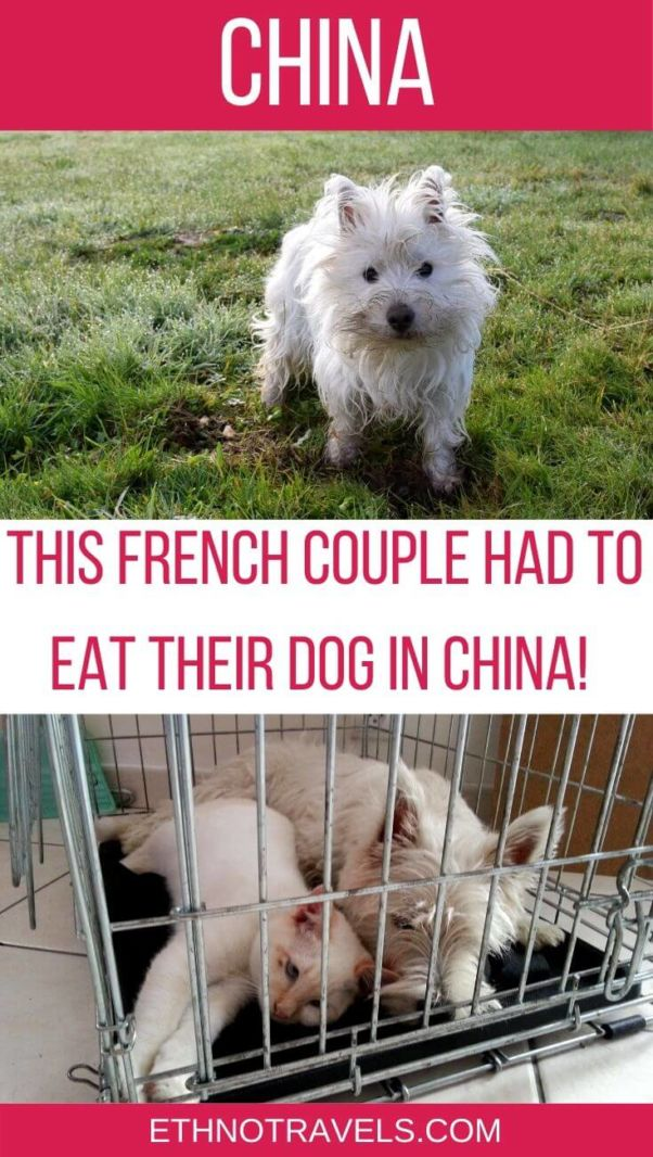 Dog meat around the world