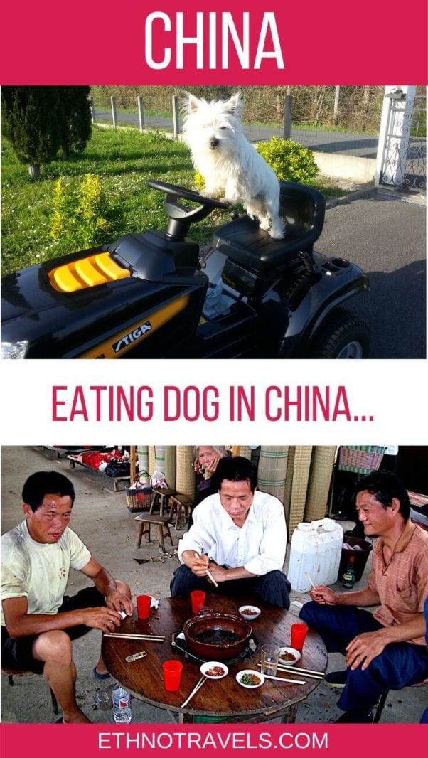 Eating dog meat in China Pin
