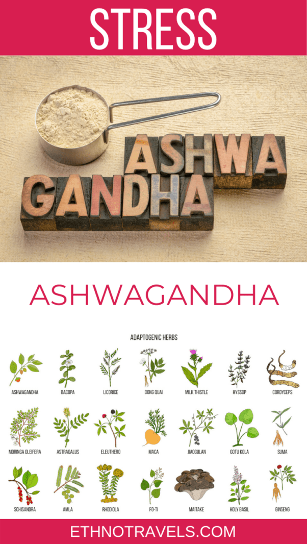 ashwagandha or withania somnifera or Indian ginseng